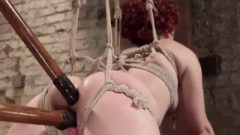 Curly Crimson A Blowjob Suspended In Rope Bondage And Toyed With